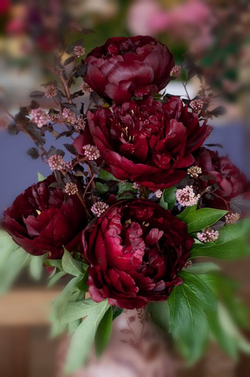 burgundy peonies.. i cannot be certain with my eyes today if roses or peonies!