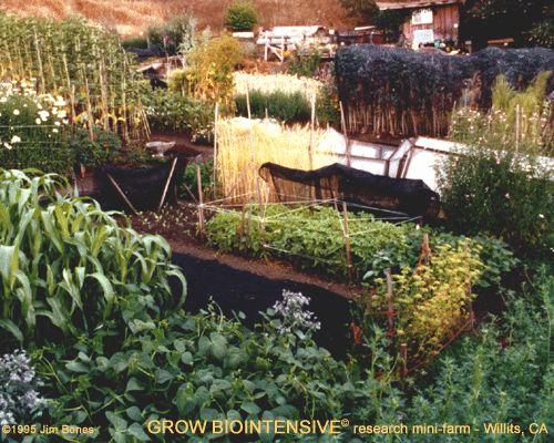 John Jeavons, Biointensive Farming Methods, Heirloom Seeds, Extraordinary!  U2022 Bountifulgardens.org