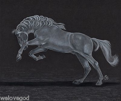Horse-White-Andalusian-Stallion-NFAC-Original-8x10-ART-Sherry-Goeben