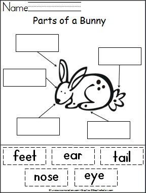Students cut out words and paste them next to the part of a bunny that they…