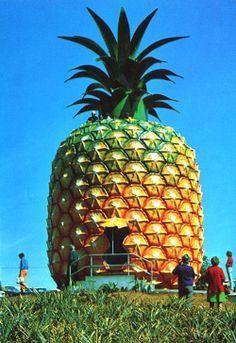 The Big Pineapple. A national treasure.