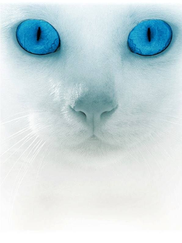 ...what beautiful blue eyes!