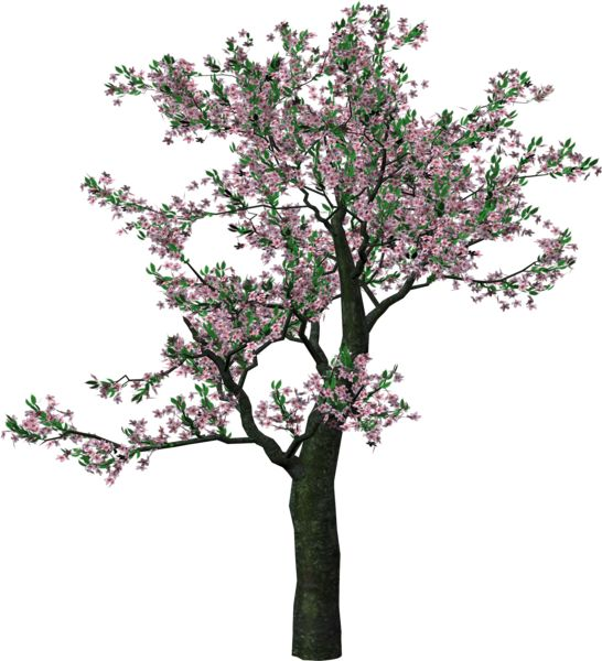 Large Spring Tree Clipart