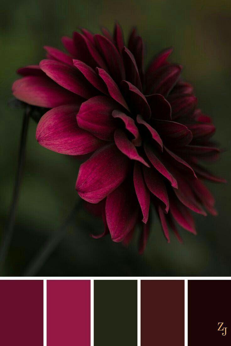 Farbpalette mit einem Pop-Pink, Rot, Burgund auf Grün und Schwarz. #burgund #ei … – Farben