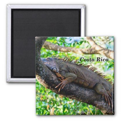 Costa Rica Muelle - Iguana resting in a tree Magnet - home gifts ideas decor special unique custom individual customized individualized
