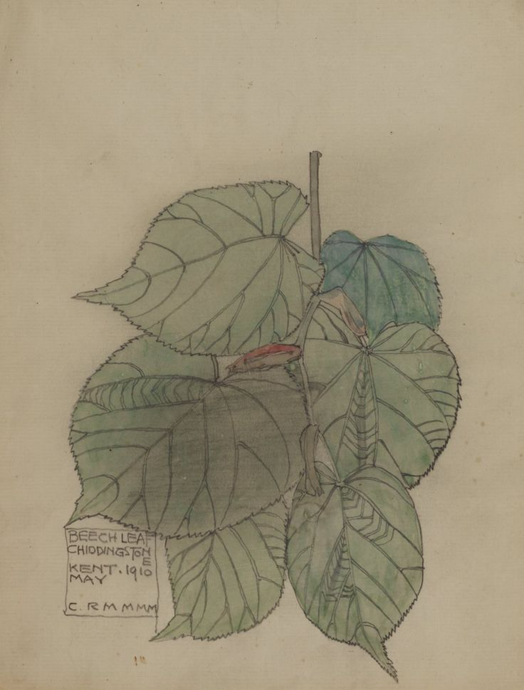 Beach Leaf Chiddingstone, Kent, 1910, May. Signed CRM for Charles Rennie Mackintosh and MMM for Margaret MacDonald Mackintosh