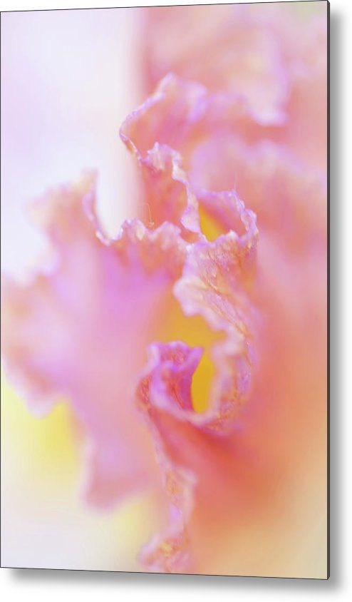 Jenny Rainbow Fine Art Photography Metal Print featuring the photograph Afternoon Delight Macro 1. The Beauty Of Irises by Jenny Rainbow