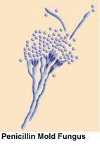 History of Penicillin - Alexander Fleming - John Sheehan - Andrew Moyer