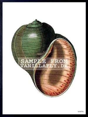 POSTER ROUND GREEN CONCH 4 (3-pack) #PSC109