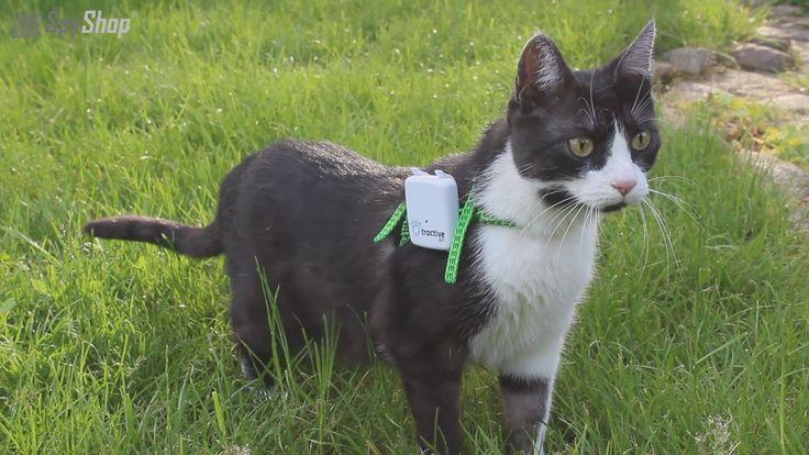 Lokalizator GPS dla psa i kota - Tractive - spyshop.pl