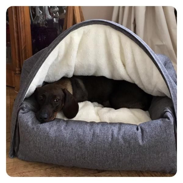 Photo Gallery With Images Cave Dog Bed Dog Bed Dachshund Love