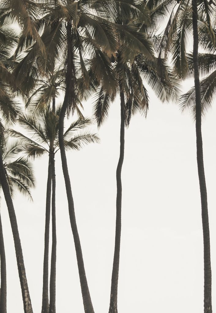 Black And White Photography Palm Trees Trees Palms Trees Black