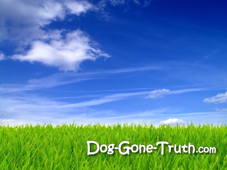 DogGoneTruth