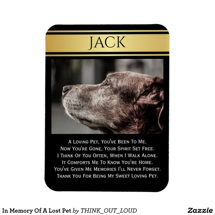 Best 25+ Lost pets ideas on Pinterest Pet loss quotes, Miss my - lost dog flyer template word