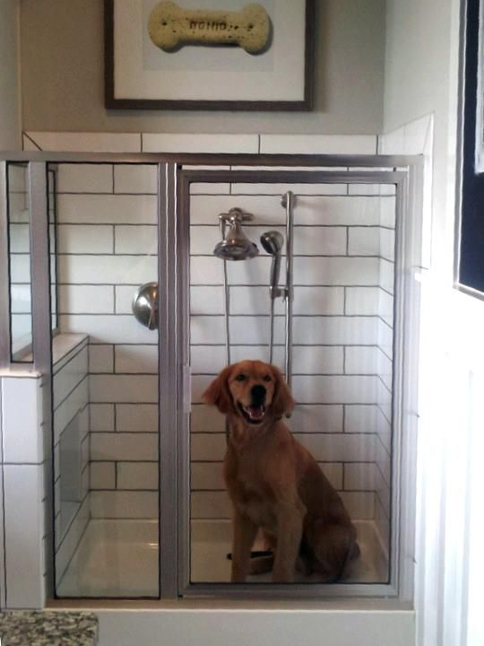 Luxury Showers best 25+ dog shower ideas on pinterest | dog wash, dog washing