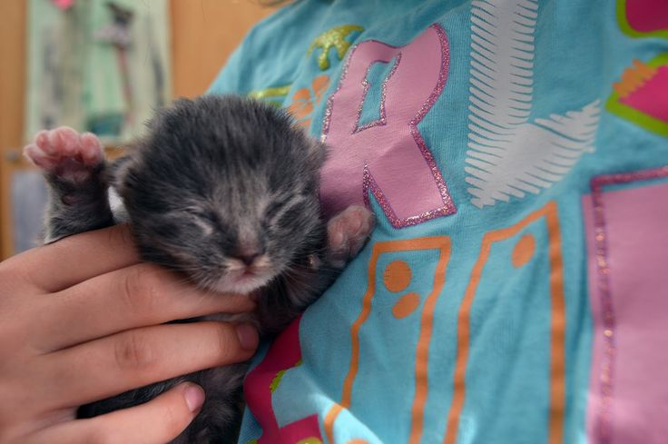 Crazy Loud Meows! 10 day old kittens