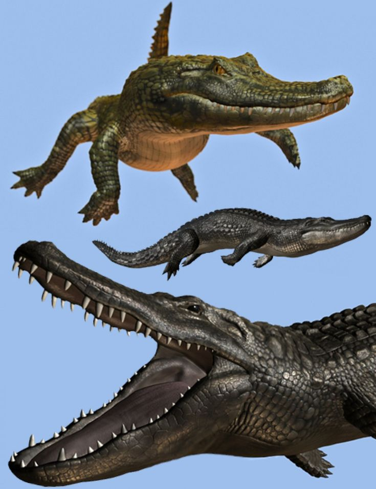 https://www.daz3d.com/crocodilia-1-alligator-and-caiman