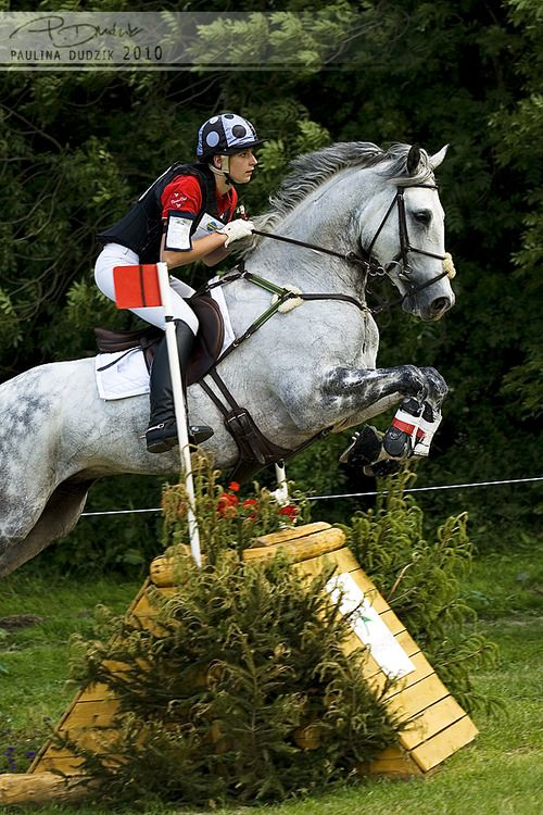 : Grey Events Horses, Horses Crosses Country Jumping, Kbchorsesuppli Com, 10Bi Paula2206 Photos, Crosses Country Horses Jumping, Equestrian Sports, Equine Beautiful, Hunters Jumpers, Jumpers Events
