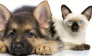 Rimuovere la pipì di cane/gatto con rimedi naturali fai da te