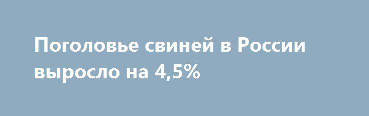 Поголовье свиней в России выросло на 4,5% http://www.furazh.ru/n/DE4A  По сравнению с прошлым годом в России увеличилось поголовьесвиней и сократилось поголовье КРС, сообщает агн. ЗерноОн-Лайн со ссылкой на Росстат.К 01 октября 2016г. поголовье свиней во всех категорияххозяйств выросло до 23,3 млн. голов, на 4,5% по сравнению спрошлым годом. Всё большая доля поголовья приходится насельхозорганизации, в то время как у населения свинейстановится меньше. По данным на 1 октября…