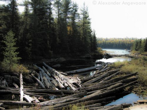 Hiking the Algonquin Highland Backpacking Trail, Thanksgiving weekend 2012. Here is a the log jam early on in the route.  ~ Algonquin Provincial Park, Ontario