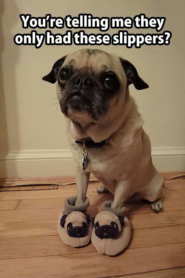 Dawwww!! Those puggy eyes!!
