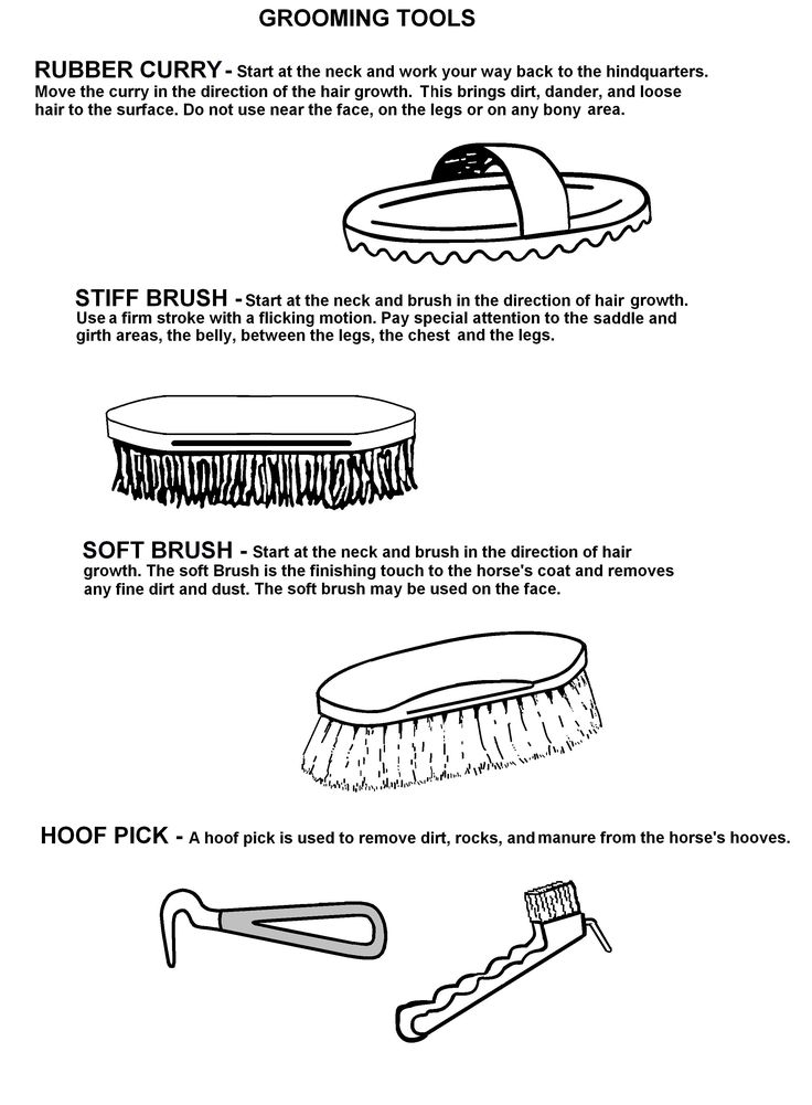 Grooming Tools  -  The rest of this workbook can be found at: http://www.pinterest.com/HorseInterests/illustrations-handouts/