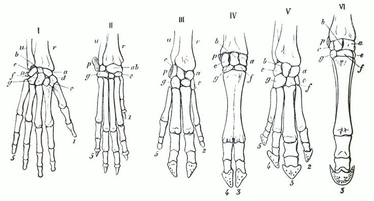 New Evidence Suggests That Human Limbs Evolved From Shark Gills