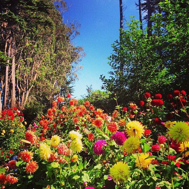 50 best demonstration gardens images on pinterest costa - Mendocino coast botanical gardens ...