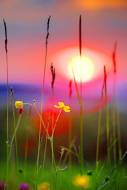 #Colorful flowers are #sunrise
