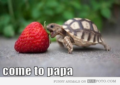 Come to papaThinking Big, Dreams Big, Strawberries, Funny, Baby Animal, Things, Nom Nom, Challenges Accepted, Baby Turtles