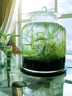 a gorgeous way to grow plants that arent very demanding! would look great with some shrimp stocked!