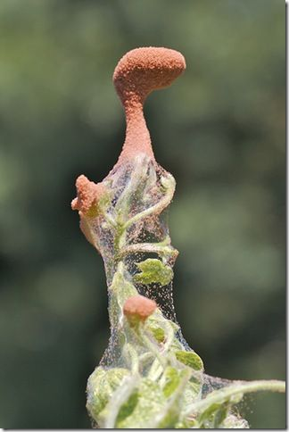Spider Mites Infest  Learn how to control them