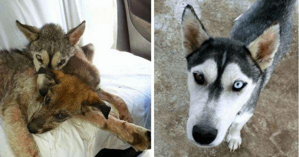 Несчастная собака погибала от голода