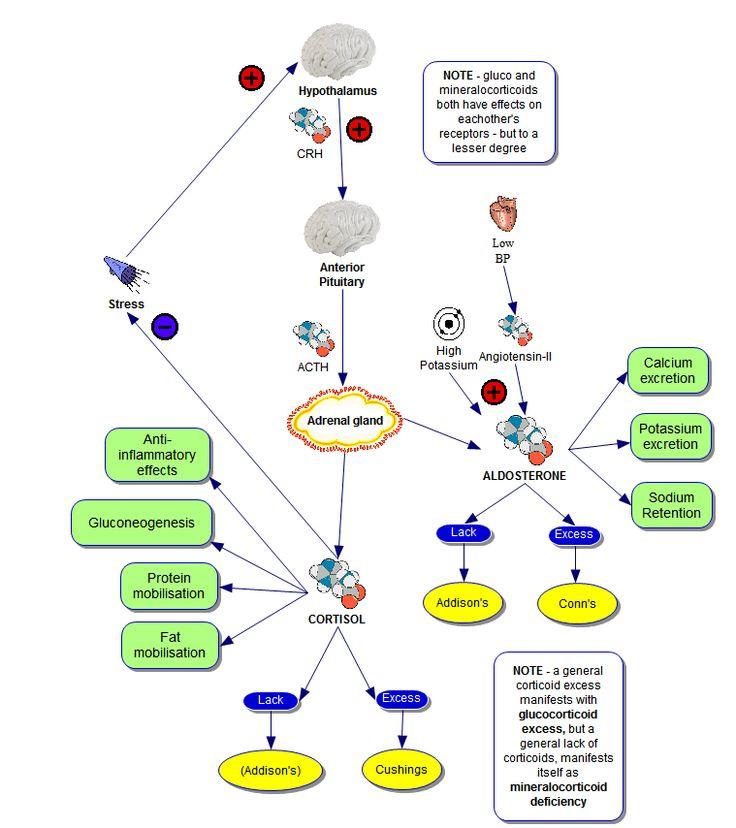 Addison's Disease - Adrenal Insufficiency