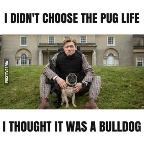 """He didn't choose the pug life"" Kungamantel the secret service is inte of my favorit movies of all time❤️ kingsman forever in my heart❤️❤️❤️❤️"