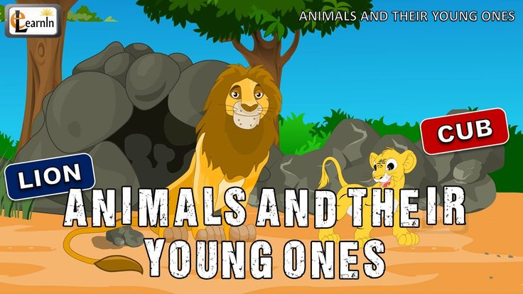 Animals and their Young Ones | The Baby Animals Song | Mother and baby a...