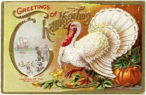 Free Vintage Image ~ White Turkey Thanksgiving Postcard