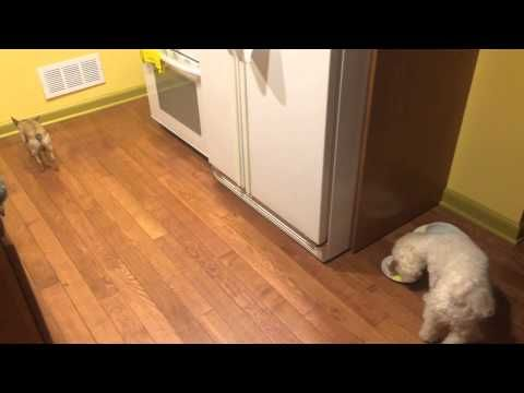 Watch This Adopted Dog Refuse To Eat Alone, Cry A Little Cry