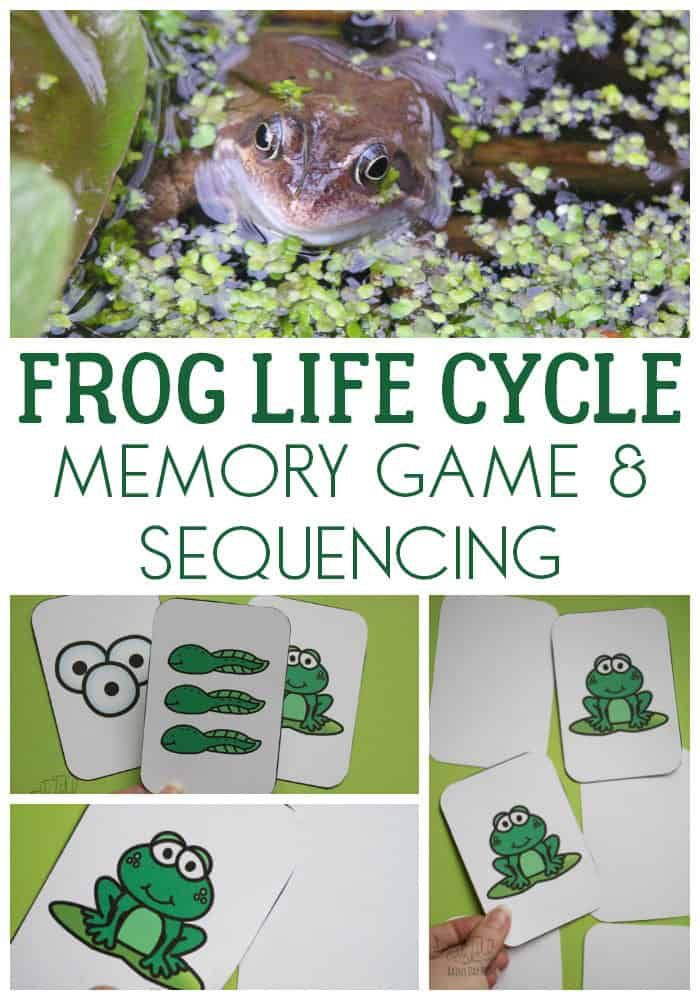 Frog Life Cycle Game and Sequencing Activity for Kids ...