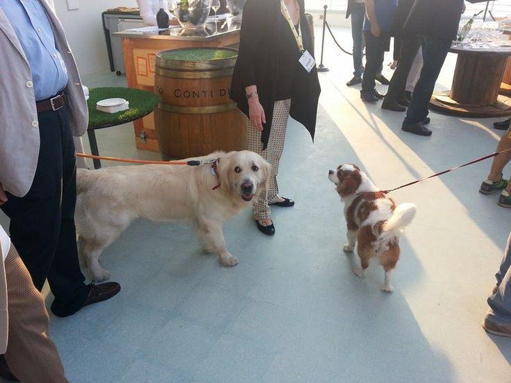 I cani dei presentatori del Caterraduno di Senigallia....Marche, Italia.  ♥♥♥♥