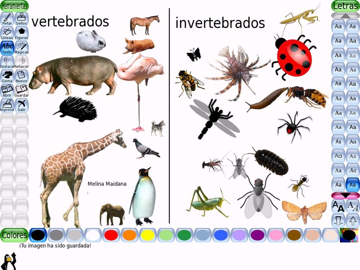 Los animales vertebrados se subdividen en:    Mamiferos:  perro, y gato.  Aves: aguila y gavilan.  Reptiles: cocodrilo e iguana.  Peces: pez martillo y tilapia.  Anfibios: rana y salamandra.  Los animales invertebrados se subdividen en:    Artropodos: araña y cucaracha.  Moluscos:  caracol y ostra.  Esponjas: esponjas marinas.  Celen