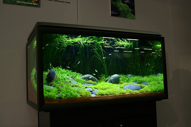 17 best images about fish tanks on pinterest super mario bros egg crates and pool tables. Black Bedroom Furniture Sets. Home Design Ideas
