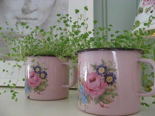 idea for cafe plant pots