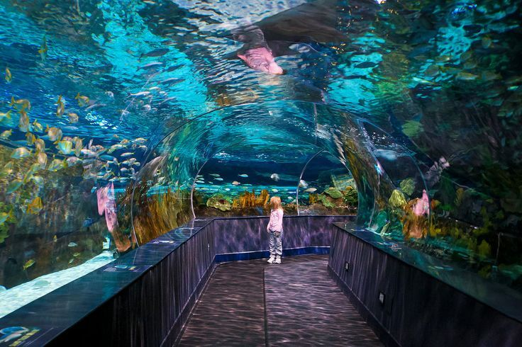 Overview: Ripley's is home to some 10,000 sea creatures, including more than 350 different species. Exhibitions include everything from a tropical rain forest to the Shark Lagoon and Penguin Playhouse. Go For: The Splash With the Stingrays experience takes any adventurer over the age of 5 (and 40 inches tall) into Touch-a-Ray bay to swim with the stingrays. Source: Ripley's Aquarium of the Smokies/Olga Molchanova