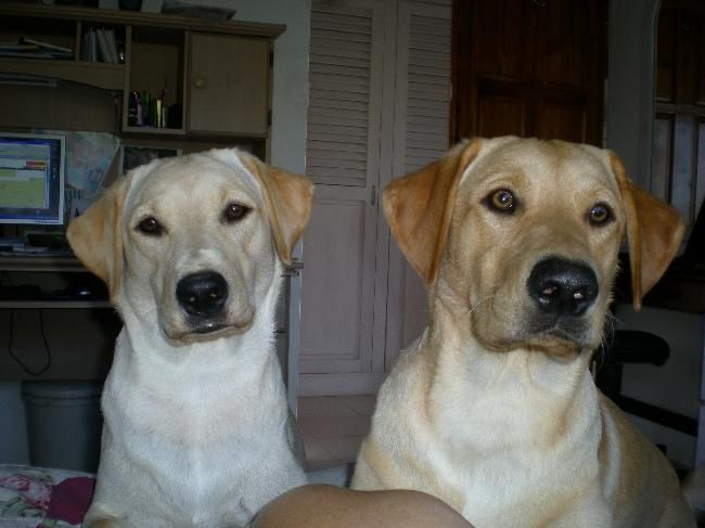 Pet sitter needed for our 2 labrador boy & girl 1 month ...  House Sitter Needed  Bequia, Island, St Vincent   Spring,Bequia Saint Vincent and the Grenadines  Jun 1,2014 For 1 month | Short Medium Term Not a member? Join today to contact homeowner limehouse We are on a very small island in the Caribbean, a very quiet location but beautiful. We need home sitters to love and love our 2 labs, they need a walk up hill once a day and a little ball throwing & feeding twice a day.