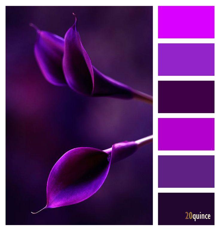 Purple Colour Scheme: 114 Best Images About Love The Palette Of Colors On Pinterest