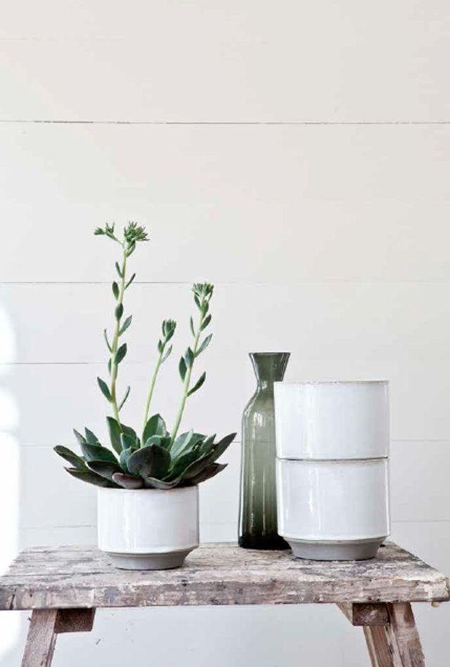 Stilleven! #rustic #charm #green #plant