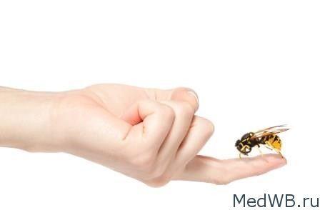 """В статье """"Аллергию на укусы насекомых как лечить и предотвратить"""" о том кто может вызавать такую аллергию и какими способами себя обезопасить и вылечить."""