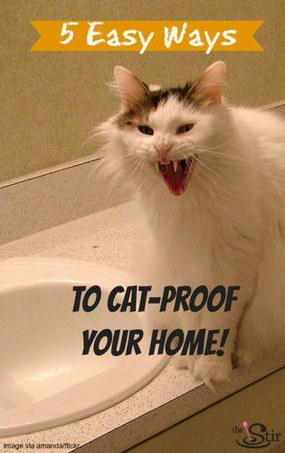 Best 20+ Cat scratch furniture ideas on Pinterest : Cat scratching, Cat scratching post and Cat ...